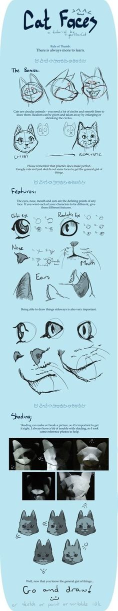 Cat Faces Drawing Reference Guide | Drawing References and Resources | Scoop.it #CatDrawing