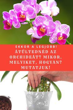 Aloe Vera, Orchids, Plant, Orchid
