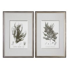 Uttermost Sepia Seaweed Prints