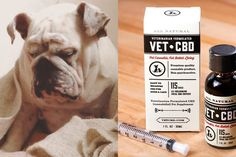 Pet owners who struggle to watch their furry loved ones deal with chronic pain and anxiety might find new hope in medical marijuana treatments. Even ...
