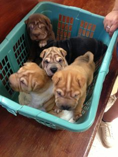 Oh look . . .a crate of happy.