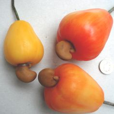 Do you know what fruit we've modeled here? They're cashew nut fruit- the nut is in a shell sticking out of the fruit. Stick It Out, Shell, Fruit, Food, Essen, Meals, Yemek, Conch, Eten