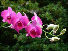 Klip7 Entretencion: Hermosas y raras flores rosadas  [10-2-16]