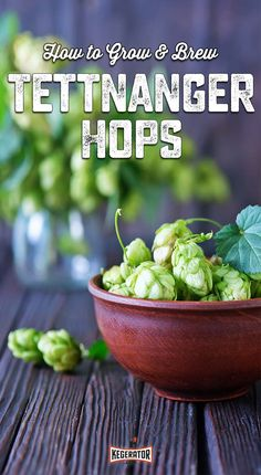 """The Tettnanger hop variety is named for Tettnang, Germany. Today, there are 135 hop farms operating in Tettnang creating large enough """"hop swaths"""" that they are visible from space. The hops produced in Tettnang make up 5% of Germany's total hop yield. Of that five percent, 80-85% is exported and the rest make their way into German beer."""
