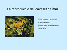 La reproducció del cavallet de mar . Saad Khaladi Lea Jurado C.Medi Natural Escola Sant Jaume Portbou 2014 2015