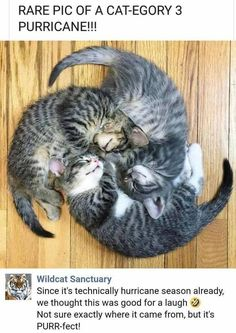 Cute Kittens Meowing For Mom Cute Cat Jewelry Cute Baby Animals, Animals And Pets, Funny Animals, Animals Images, Cute Kittens, Cats And Kittens, Kitty Cats, Kittens Meowing, Cats Bus