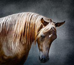 Amazing Arabian art photos by Tariq Dajani