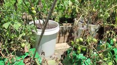 Tomato Containers--Size Matters: Grow Bags, Straw Bales & 5 Gallon Contain...