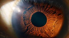 Neurologists scratch their heads on how we convert the data deluge from our eyes