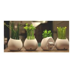 Plants LED lamp | Home decoration Plant Lighting, Night Lamps, Led Lamp, Plant Based, Planter Pots, Home And Garden, Table Decorations, Plants, Galaxies
