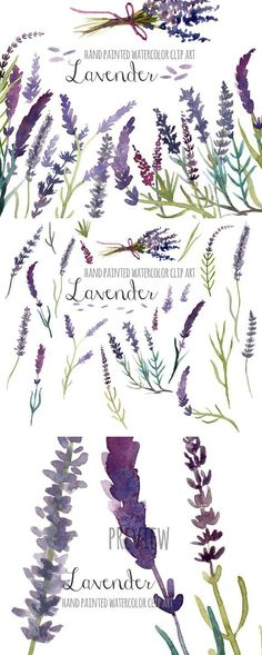 Lavender clip art, floral clip art, hand painted watercolor clip art, Pretty clip art set with hand painted lavender flowers. These watercolor images can be Watercolor Images, Watercolor Flowers, Watercolor Paintings, Watercolor Ideas, Watercolors, Family Art Projects, Canvas Art Quotes, Word Art Design, Body Art Photography