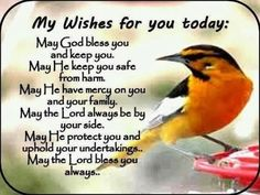 my wishes for you today quotes quote bird good morning morning quotes today quotes life