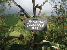 SLOG - South Lakeland Orchard Group