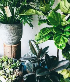 """treasuresandtravels:  """"We spent some time at our favorite plant shop @bloomroomvancouver and learned so much about taking care of our indoor plants! We posted tons of tips on the blog and insightful hints for helping your plants survive through the..."""