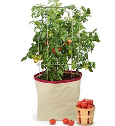 Harvest Grow Tomato Bag by Homegrown Gourmet by Architec at Gilt Tomato Planter, Tomato Garden, Vegetable Garden, Container Gardening, Gardening Tips, Gardening Vegetables, Root Vegetables, Garden Planters, Planter Pots