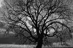 black and white photos trees | general impression this is what black and white does well nice ...