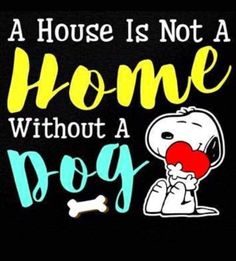 Snoopy Quotes, Dog Quotes, Animal Quotes, Decorating Shirts, Silly Me, Charlie Brown And Snoopy, Snoopy And Woodstock, Peanuts Snoopy, Dog Photography