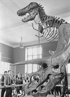 Students in the Cretaceous Dinosaur Hall at the American Museum of Natural History ,  1966