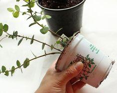 Planting Succulents, Garden Plants, Indoor Plants, Planting Flowers, Garden Gnomes, Hydroponic Gardening, Hydroponics, Gardening Tips, Indoor Gardening