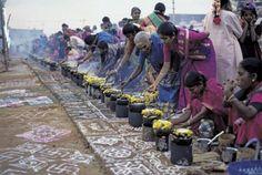 Pongal a celebrated Hindu Festival of India