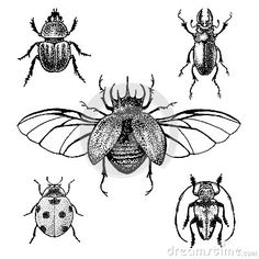 insect outline tattoo - Google Search