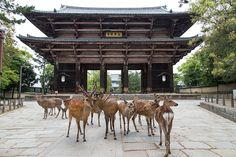 Nara Park and it's deer!    Great Japan Trip 2018: The plan!    Check it if you like travel and share your opinion!