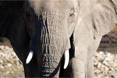 Partez pour un safari dans la réserve de Mashatu au coeur du Botswana #chevaldaventure