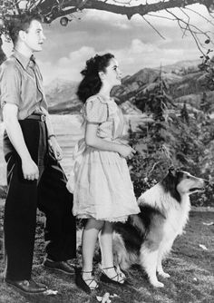 "Elizabeth Taylor in ""Courage of Lassie"" (1946). In this movie Liz Taylor's character is named 'Kathie' and the collie's name is 'Bill' :)"