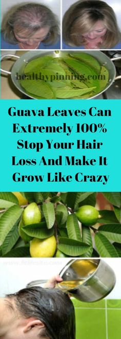 Guava Leaves Can Extremely Stop Your Hair Loss And Make It Grow Like Crazy – Healthy Pinning Health And Nutrition, Health Tips, Home Remedies, Natural Remedies, Guava Leaves, Like Crazy, Healing Herbs, Hair Health, Get Healthy