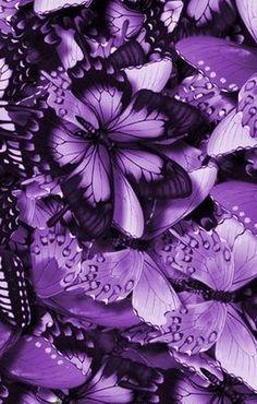Love of purple~butterflies`