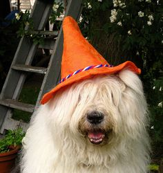 Official supporter of the dutch footbal team 2008 by dewollewei, via Flickr
