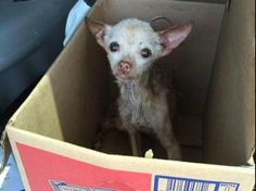 **DONATION NEEDED!** Puppies abandoned at shelter in sealed Budweiser beer box-slide0