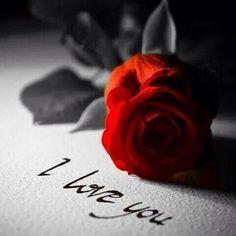 Avui les roses son més que llum i color, són passió, esperança i amor. Feliç Sant Jordi ❤⠀⠀⠀⠀⠀⠀⠀⠀⠀⠀⠀⠀⠀⠀⠀⠀⠀⠀⠀⠀⠀⠀⠀⠀⠀⠀⠀⠀Hoy las rosas son mas que luz y color, son pasión, esperanza y amor. Feliz San Jorge. ❤ #orelsebarcelona #santjordi #regalaamor #rosas #amor