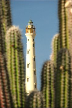 California Lighthouse, taken from Arashi Beach, Aruba by Divonsir Borges California Lighthouse, Costa, Southern Caribbean, Aruba Caribbean, Beacon Of Light, Places Ive Been, Travel Inspiration, Around The Worlds, Vacation