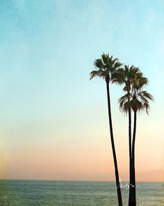 """""""Palm Sunset""""- Palm trees on the cliff overlooking the Pacific in Laguna Beach, California at sunset. By kelly*n photography"""
