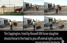 "Last night we received this shocking video of Tim Sappington shooting a horse to make... a point against all animal activists who might get in his way. He stated ""All you animal activists, fuck you"" and then shot the horse at point blank range. This could be considered a hate crime against all of us who have spoken out against the Roswell NM horse slaughterhouse. The owner of the slaughter house intends to hire 40-100 people, and Tim is the first employee of Valley Meat Co."