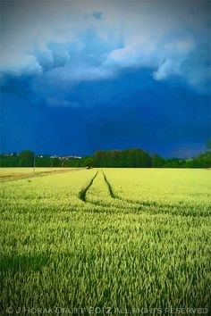 After the storm, central France (photo by Jeanne Horak-Druiff)