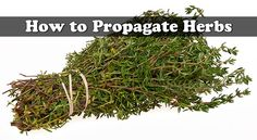 How to Propagate Herbs