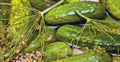 These quick dill pickles are quick to make — and to disappear! This might just be the one If you're looking for a go-to recipe for refrigerator pickles. Quick Refrigerator Pickles, Plant Based Snacks, Drying Dill, Homemade Pickles, Pickling Cucumbers, Thm Recipes, Vegan Snacks, Paleo Diet, Canning