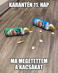 Funny Fails, Funny Memes, Some Jokes, Haha, Funny Pictures, Hungary, Funny, Corona, Fanny Pics