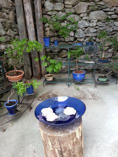 Chicano, B & B, Bird, Outdoor Decor, Home Decor, Birds, Interior Design, Home Interior Design, Home Decoration