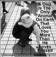 Something to be said for unconditional love. Follow us for daily dog quotes and more! #quote #animallover #doglover #motivation #dogblog #dogmom #dogquotes Love My Dog, Puppy Love, That's Love, Love Him, Mans Best Friend, Best Friends, Friends Forever, Animals And Pets, Cute Animals