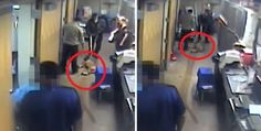 The Emanuel administration has released a video of an incident in which a dog at the city pound died after being choked by animal care workers.    The...