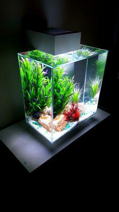 Najlepsze Obrazy Na Tablicy Oświetlenie W Akwarium I Terrarium