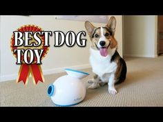 With an automatic ball thrower your dog has hours of fun! We have an in-depth buyers guide of the best dog ball thrower. Your dog will love this feature. Best Dog Toys, Best Dogs, Dog Ball Thrower, Obedience School For Dogs, Dog Boarding Near Me, Ball Launcher, Dog Tags Military, Herding Dogs, Aggressive Dog