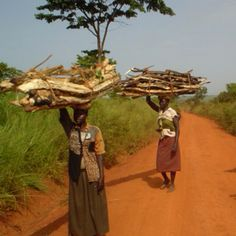 South Sudanese women caring fire wood on their heads