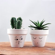 Luxury Small Cactus Ideas For Home Decoration. Here are the Small Cactus Ideas For Home Decoration. This post about Small Cactus Ideas For Home Decoration was posted  Small Cactus, Cactus Flower, Flower Pots, Flower Bookey, Flower Film, Cactus Cat, Cactus House Plants, Cactus Decor, Painted Pots