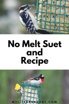 Make your own suet recipe and watch the birds flock to your feeders. Its easier than you think and also learn about No Melt Suet Suet Bird Feeder, Bird Seed Feeders, Bird House Feeder, Best Bird Feeders, Suet Recipe, Suet Cakes, Bird Seed Ornaments, Homemade Bird Feeders, Wild Bird Food