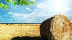 Ecco le novità fiscali introdotte dalla Legge di Stabilità 2017per il settore agricolo: bonus agriturismi, spesometro, nuove aliquote, abolizione IRPEF ...