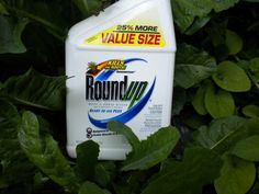The active ingredient in Roundup - glyphosate - damages the functioning of beneficial gut bacteria contributing to a host of ailments and widespread inflammation.  I'll take weeds on my driveway instead, thank you very much!